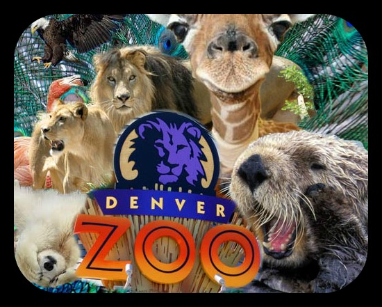 Denver Museum Of Nature And Science Discount Tickets